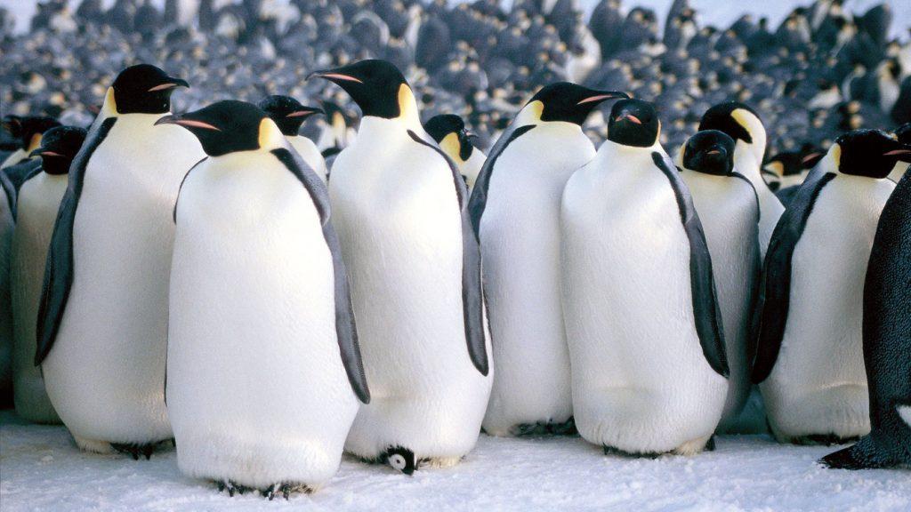 Calea împăratului / March of the Penguins (regia: Luc Jacquet, 2005)